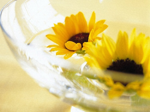 sunflower_flowerlanguage_4