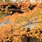 箱根の紅葉の時期や見ごろは?おすすめのスポットもご紹介!