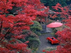 kyoto-kouyou-anaba-1