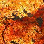 京都の紅葉の穴場スポットはどこ?地元の人しか知らないオススメ