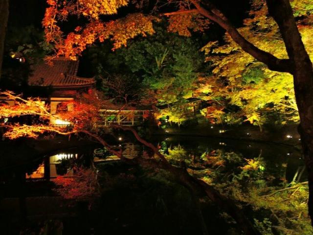 kyoto-kouyou-lightup-1