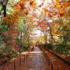 京都の紅葉、お寺で風情たっぷりに味わうならココがおすすめ!