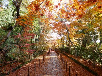 kyoto-kouyou-temple l-7