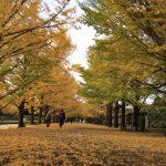 昭和記念公園の紅葉、見頃はこの時期!おすすめのスポットは?