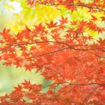 東福寺の紅葉の見頃の時期は?混雑はどれぐらい?