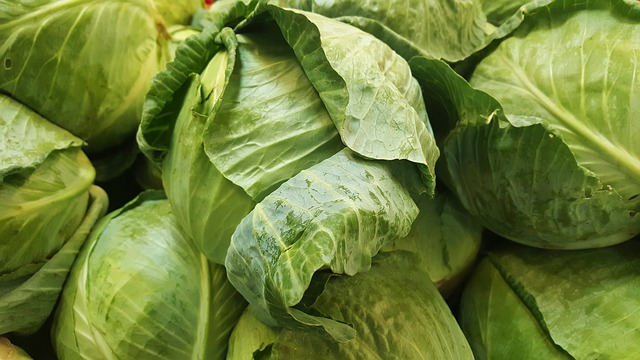cabbage-fat-1
