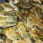 牡蠣の食中毒の症状3つと原因や対処法について!知らないと怖い!