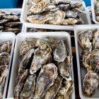 牡蠣にはどれぐらい亜鉛が含まれてる?実は自然のサプリ!