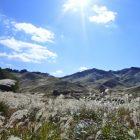 仙石原すすき草原の周りでおすすめの駐車場3つ!周辺ドライブ情報も